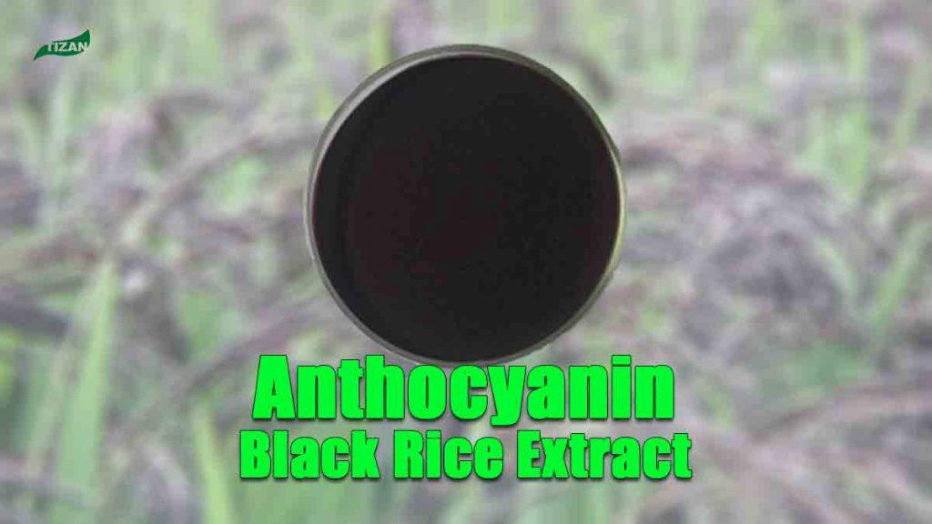 Anthocyanin Extract Powder Black Rice Extract Powder