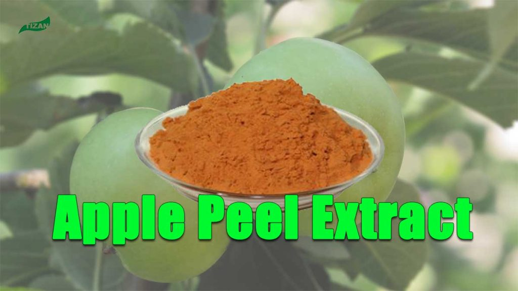 Apple Peel Extract Powder Apple Polyphenols