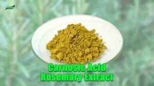 Carnosic Acid Rosemary Leaf Extract