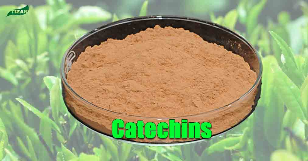 Catechins Powder