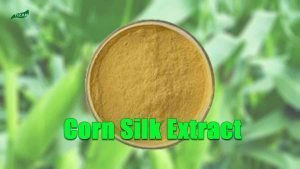 Corn Silk Extract Beta Sitosterol Powder Wholesales
