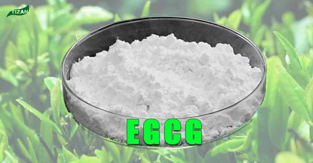 EGCG-Green-Tea-Extract
