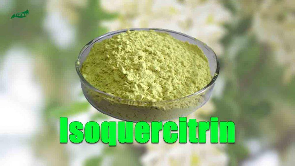 Isoquercitrin Sophora Japonica Extract