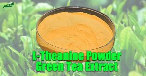 L-Theanine Powder Green Tea Extract