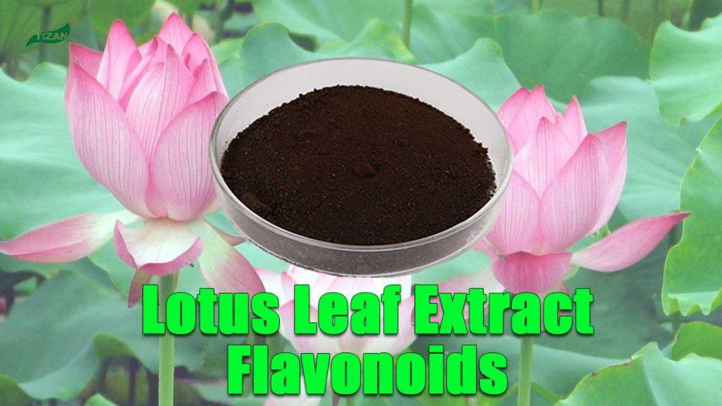 Lotus Leaf Extract Flavonoids Powder Folium Nelumbinis Extract