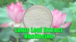 Lotus Leaf Extract Nuciferine Powder