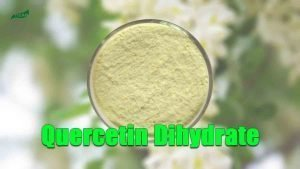 Natural Quercetin Dihydrate Powder Sophora Japonica Extract