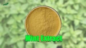 Peppermint Extract | Pure Mint Extract | Mentha Sachalinensis Extract