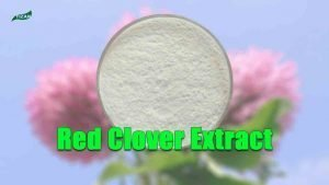 Red Clover Isoflavones Red Clover Extract Powder