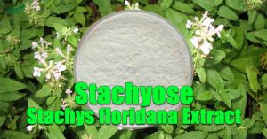 Stachys floridana Extract Stachyose