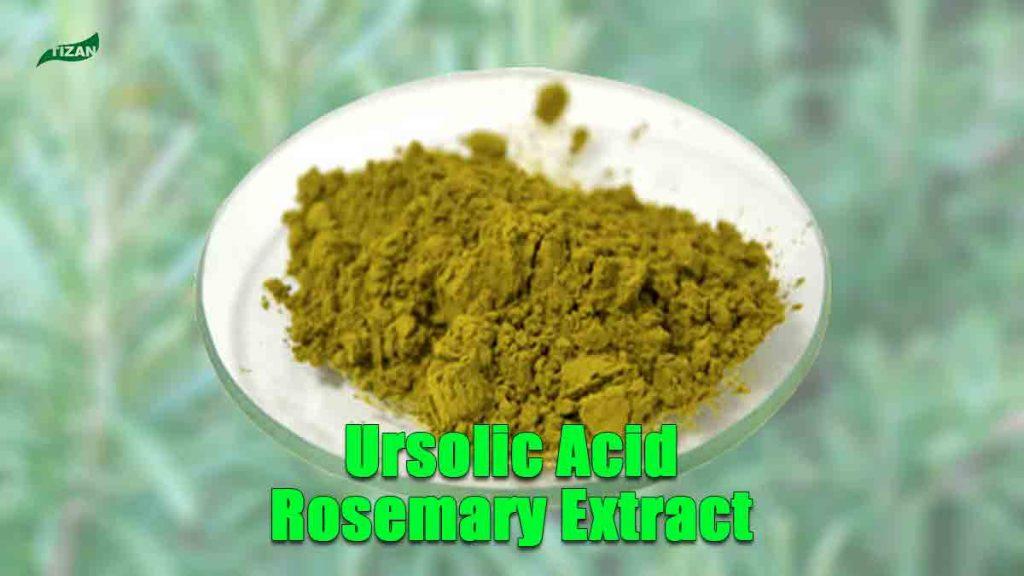 Ursolic Acid Rosemary Extract Powder