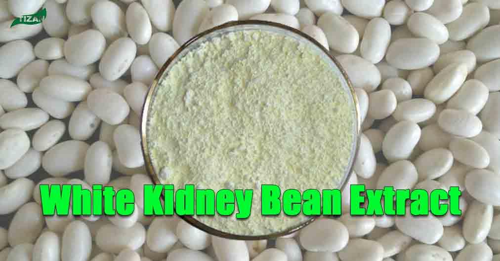 White Kidney Bean Extract