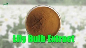 White Lily Bulb Extract Powder