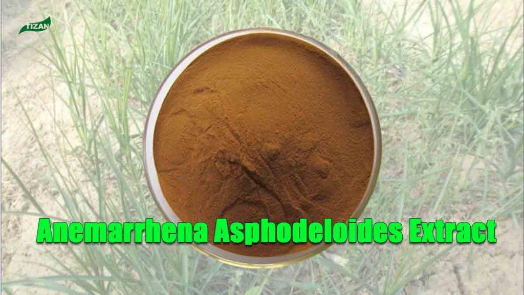 Anemarrhena Asphodeloides Extract Powder