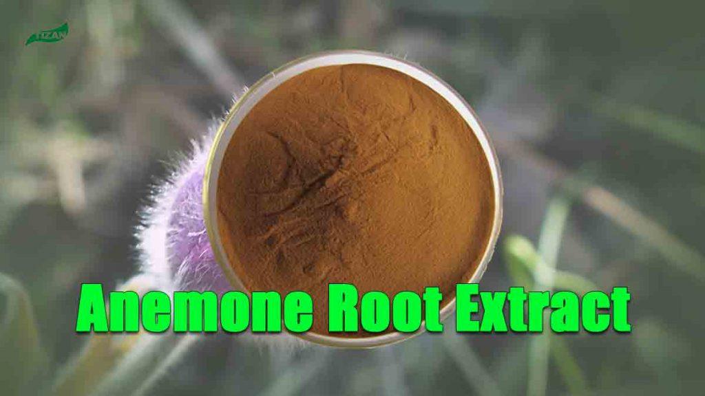 Anemone Chinensis Root Extract Anemonin