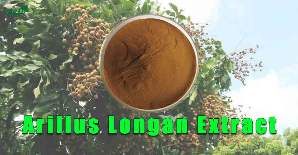 Arillus Longan Extract Powder