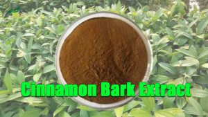 Cinnamon Bark Extract Cinnamaldehyde Cinnamon Extract Polyphenol