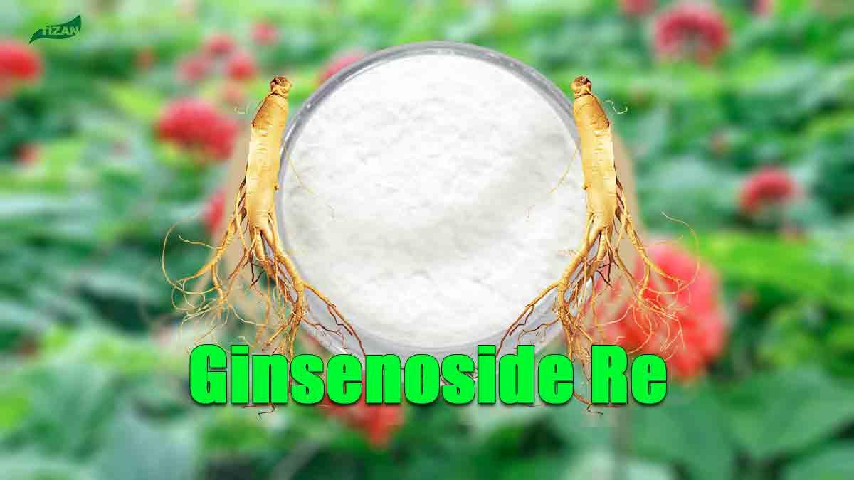 Ginseng Extract Ginsenoside Re Powder
