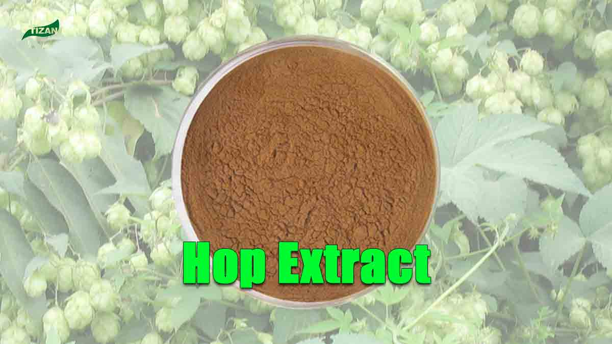 Hop Extract Xanthohumol Extract Hops Flower Extract Flavonoids