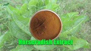 Horseradish Extract Powder