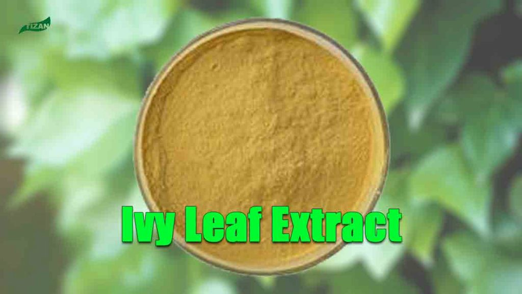 Ivy Leaf Extract Hederacoside C Ivy Extract Hederagenin Powder