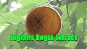 Juglans Regia Extract Walnut Extract Natural DHMA Powder