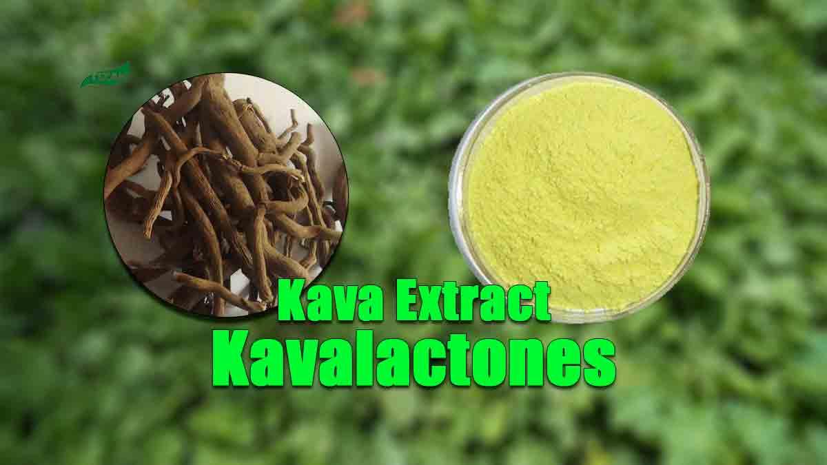 Kava Extract Powder Kavalactones