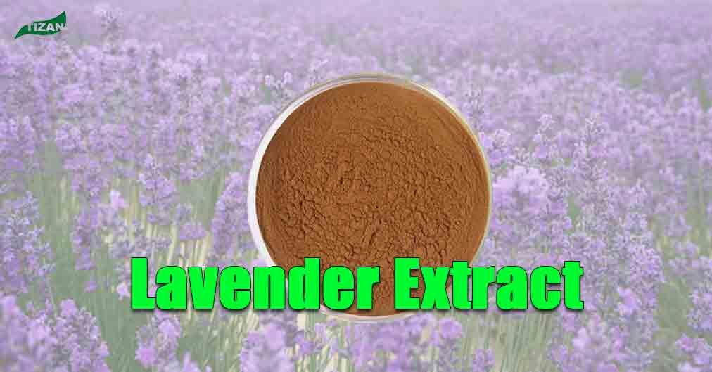 Lavender Extract Powder | Lavandula angustifolia Extract
