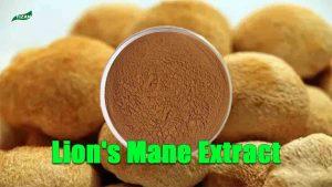 Lion's Mane Extract Hericium Erinaceus Extract Lion's Mane Mushroom Extract