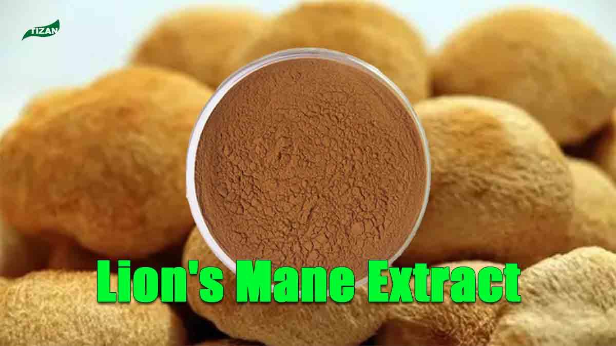Lion's Mane Extract Hericium Erinaceus Extract Lion's Mane Mushroom Extract Powder