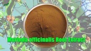 Morinda officinalis Root Extract Powder