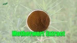 Motherwort Extract Powder