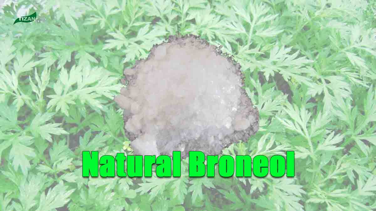 Natural Broneol L-Borneol Aipian Blumea Balsamifera Extract