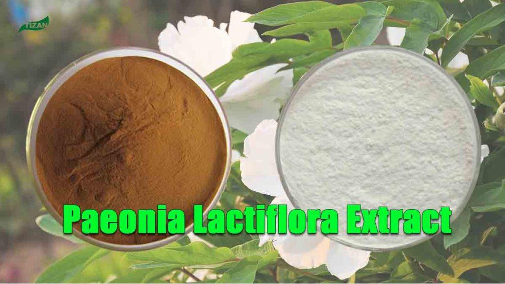 Paeonia Lactiflora Extract Paeoniflorin Powder