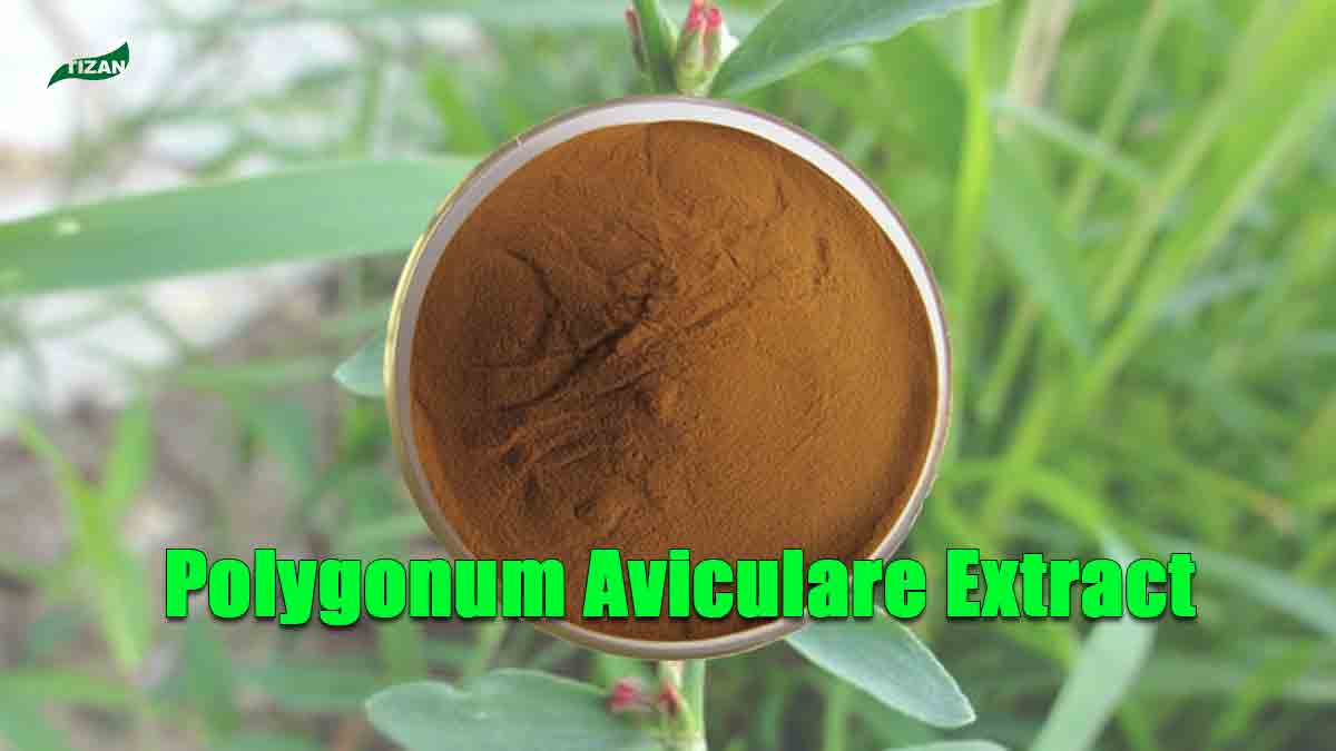 Polygonum Aviculare Extract Knotgrass Extract Powder