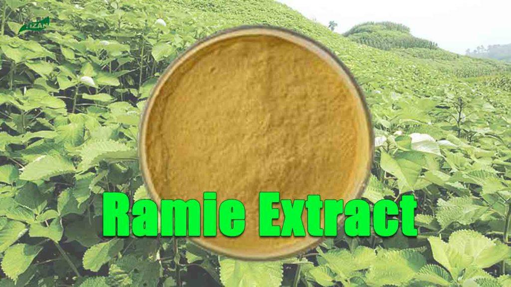 Ramie Extract Powder