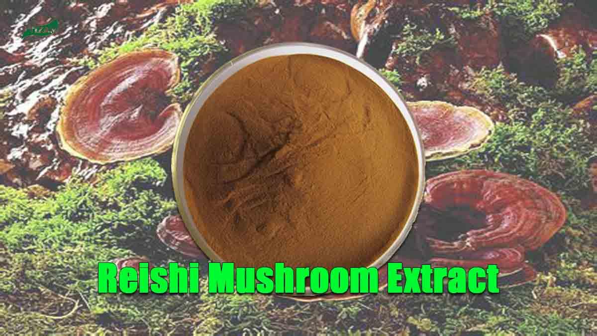 Reishi Mushroom Extract Ganoderma Lucidum Extract Powder