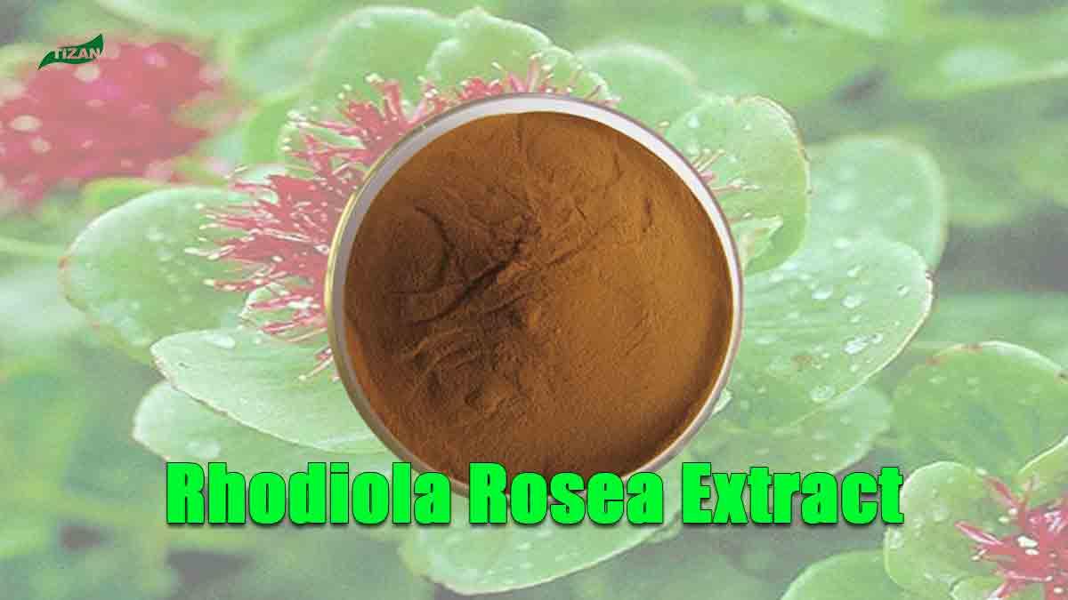 Rhodiola Rosea Extract Salidroside Rosavin