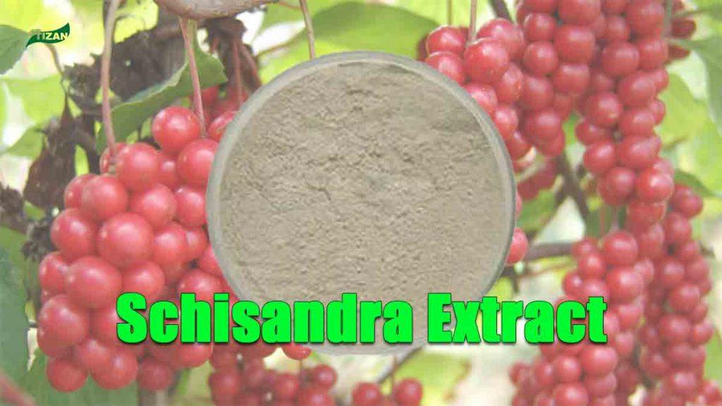 Schisandra Extract Schisandrins | Schizandrol A | Schisandrin B