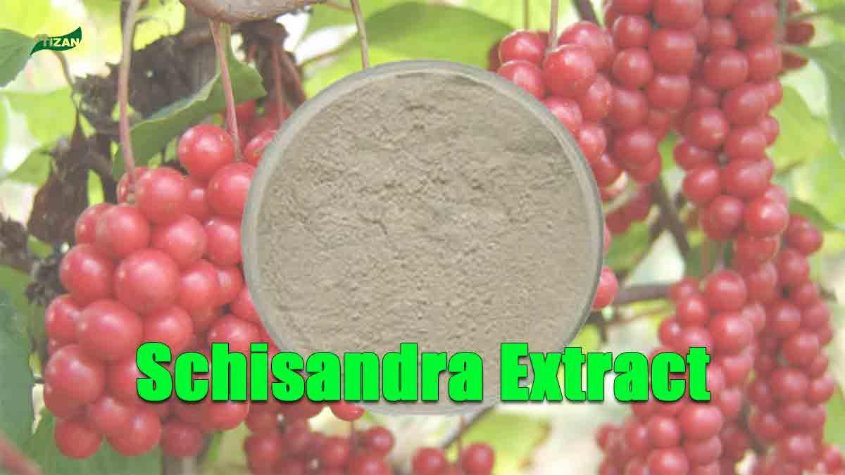 Schisandra Extract Schisandrins  Schizandrol A  Schisandrin B