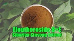 Siberian Ginseng Extract Eleutheroside B+E Eleutherococcus Senticosus Root Extract
