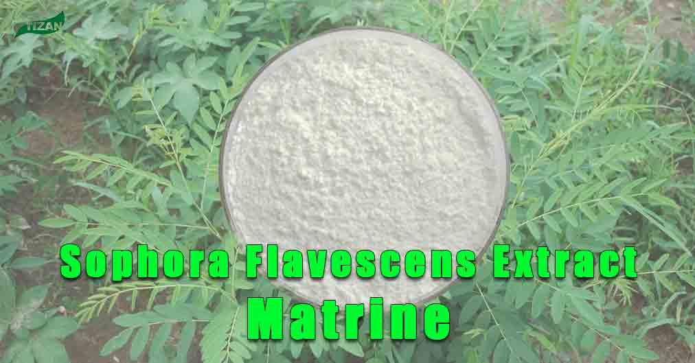 Sophora Flavescens Extract Matrine