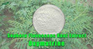 Sophora Flavescens Root Extract Oxymatrine