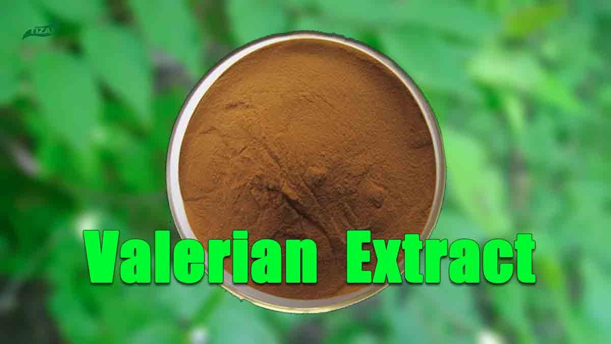 Valerian Root Extract Valeric Acid Valerian Extract Powder