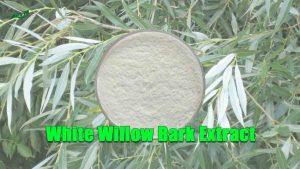 White Willow Bark Extract Salicin
