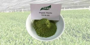 culinary-grade-organic-Matcha-green-tea-powder-TZ-M-202